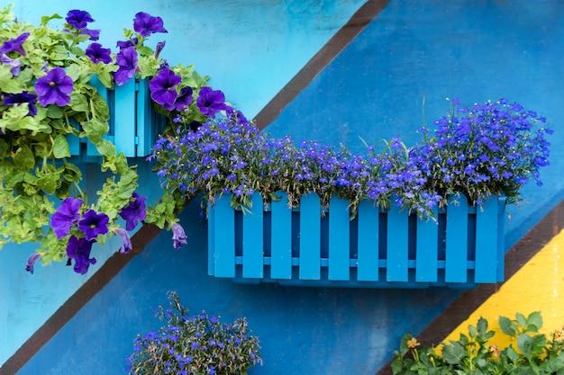 Plantes et fleurs dans des pots en bois sur fond peint coloré