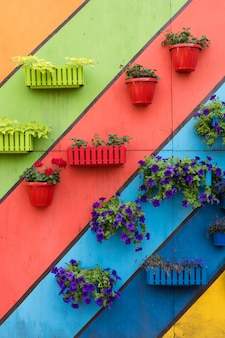 Plantes et fleurs dans des pots en bois et en plastique sur fond peint coloré