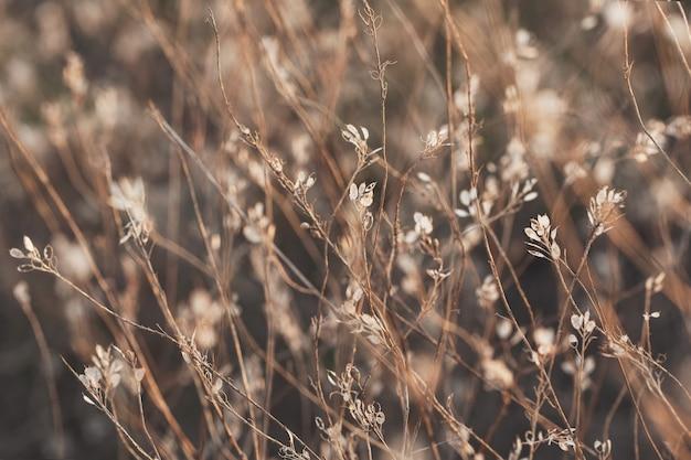 Plantes et fleurs à l'heure d'or.