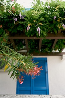 Plantes en fleurs sur le treillis du balcon au-dessus de la porte d'entrée