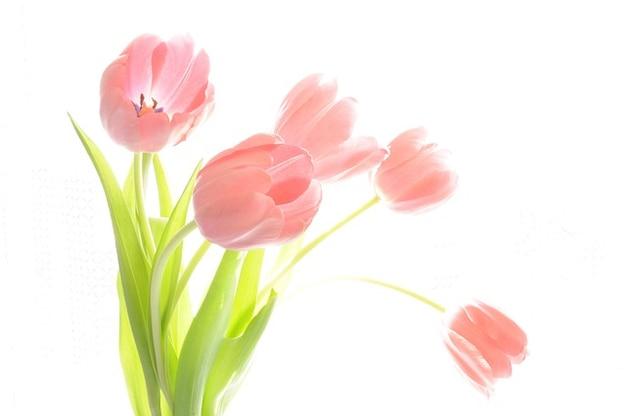 Plantes fleurs tulipes vacances bouquet
