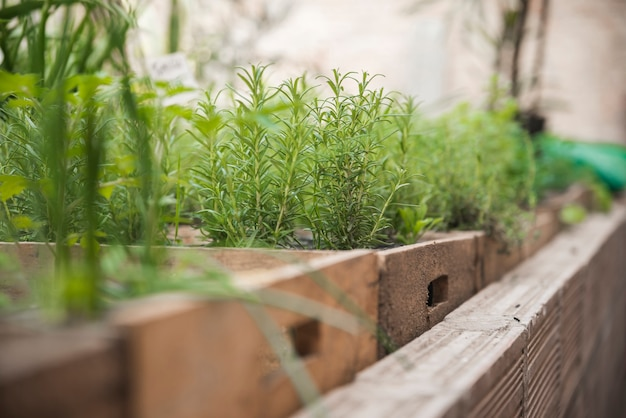 Plantes fraîches poussant en serre