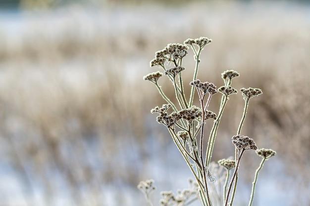 Plantes gelées tôt le matin se bouchent en hiver