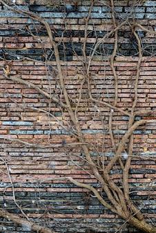 Plantes grimpantes avec des baies sèches sur un mur de briques.