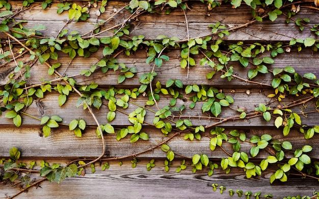 Plantes grimpantes avec une planche en bois d'horizon