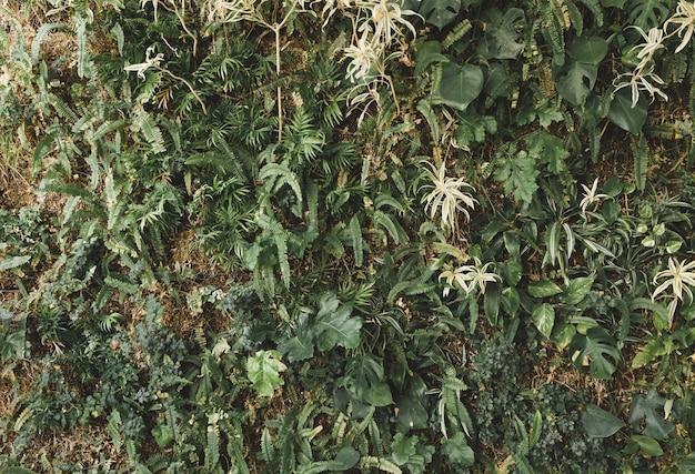 Plantes grimpantes vertes poussant sur un mur