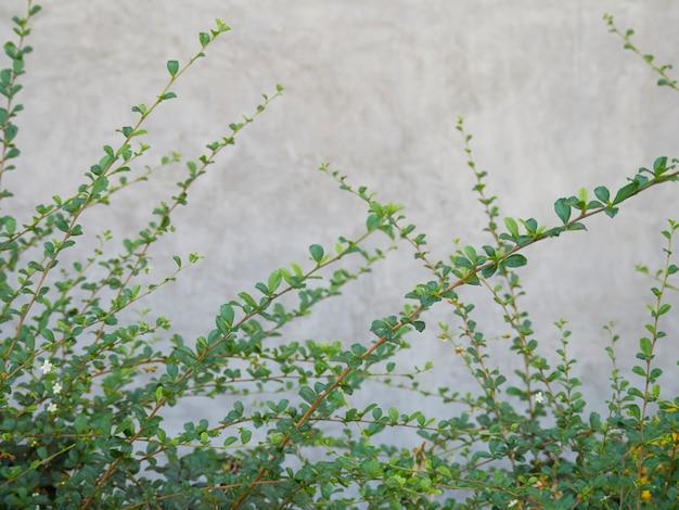 Plantes d'herbe verte sur fond de texture de mur