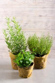 Plantes d'herbes fraîches en pots, utilisées pour la cuisine. romarin, thym, menthe