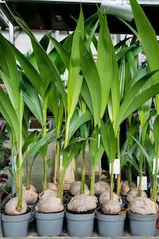 Plantes d'intérieur dans la jardinerie