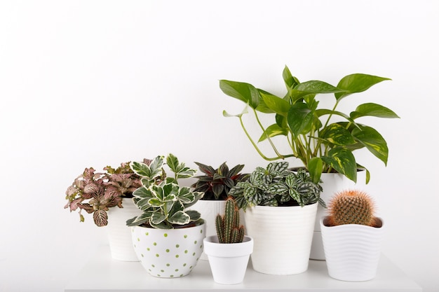 Plantes d'intérieur dans des pots de fleurs modernes