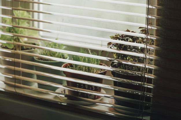 Plantes d'intérieur sur la fenêtre