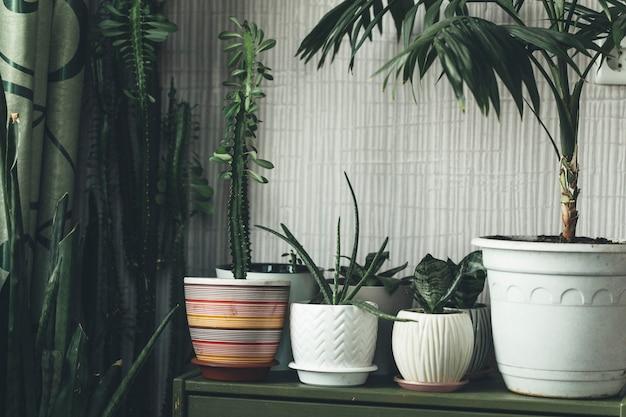 Plantes d'intérieur à la maison sur la commode