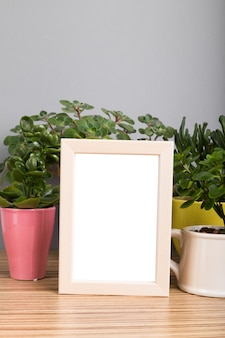 Plantes d'intérieur. plantes succulentes