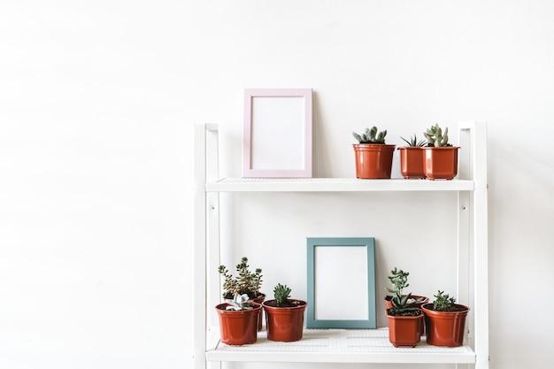 Plantes d'intérieur en pots sur une étagère blanche à la maison