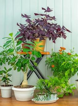Plantes d'intérieur en pots de fleurs sur un plancher en bois
