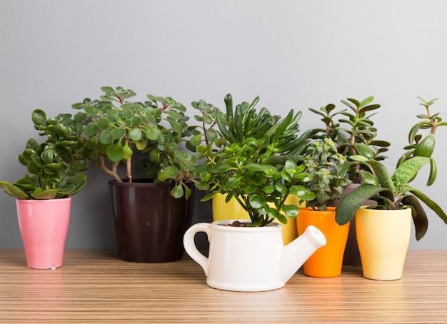 Plantes d'intérieur. succulentes