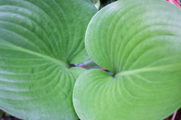 Plantes De Jardin Nature Fond De Feuilles Vertes, Stock Photo Photo Premium