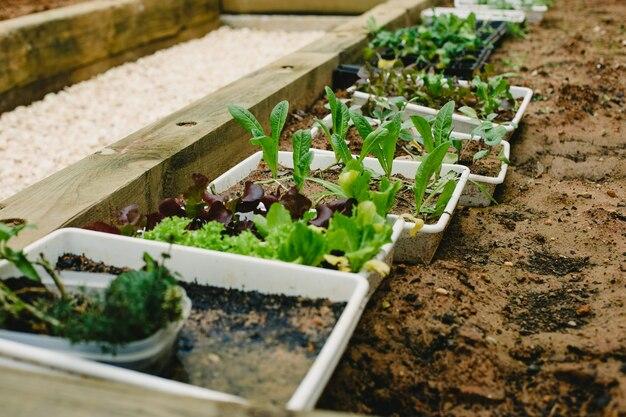 Plantes et légumes aromatiques dans un jardin familial