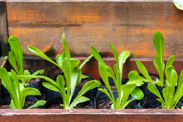 Plantes de légumes biologiques, feuilles vertes