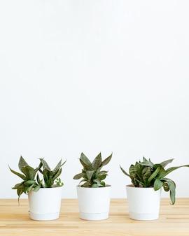 Plantes à la maison sur table sur fond blanc..