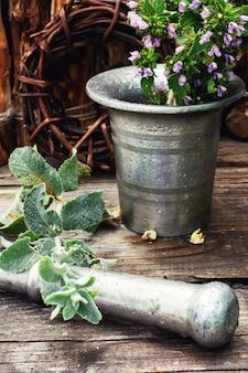 Plantes médicinales et mortier