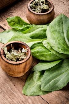 Plantes médicinales à valeur plantain