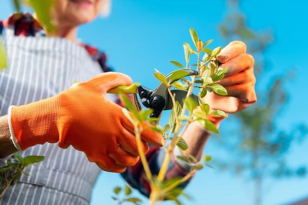 Les plantes. motivée, belle dame agréable se sentant bien tout en travaillant dans le jardin