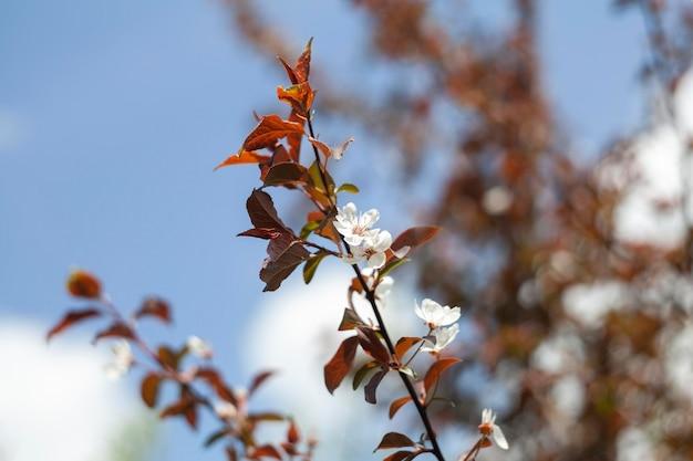 Plantes naturelles de végétation dans le parc