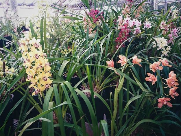 Plantes d'orchidées fleurissant en serre chaude