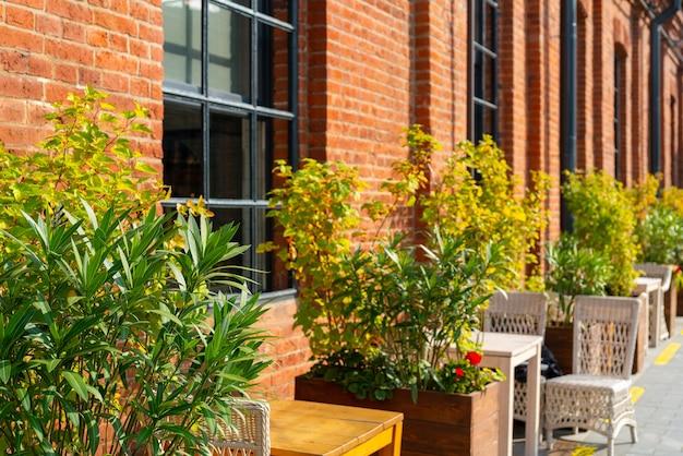 Plantes ornementales dans un café de rue local