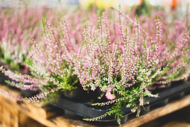 Plantes ornementales dans un magasin de fleurs. herbier et plantes vivantes. décoration et déco, cadeaux.