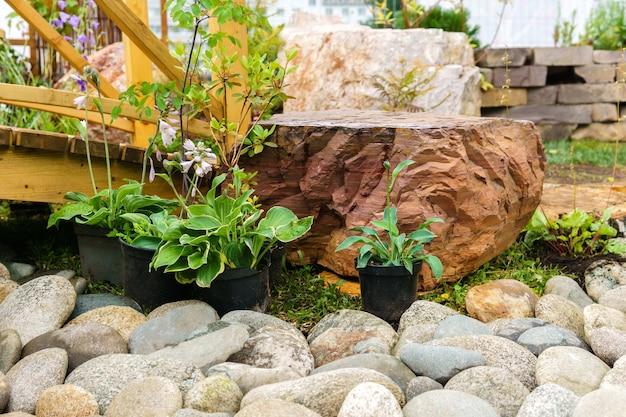 Plantes ornementales en pot préparées pour la plantation en pleine terre en rocaille