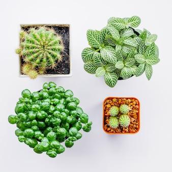 Plantes ornementales en pots sur blanc
