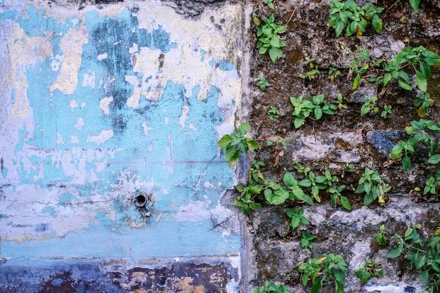 Plantes parasites sur l'ancien mur.