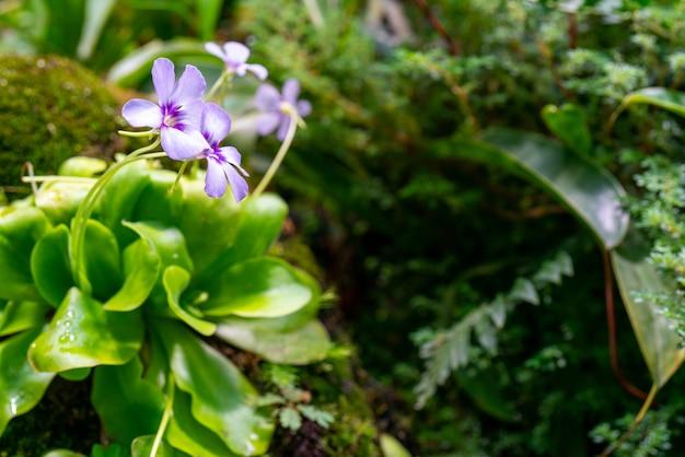 Plantes Et Pierres Dans Le Terrarium. Beau Fond Naturel. Photo Premium
