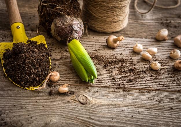 Plantes de plantation et accessoires de jardin