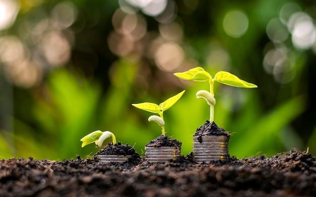 Plantes plantées sur un tas de pièces