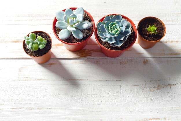 Plantes en pot sur bois blanc