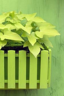 Plantes en pot en bois sur fond vert