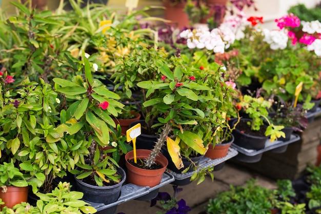 Plantes en pot colorées. différentes plantes en pot et semis