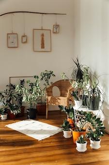 Plantes en pot sur fond blanc