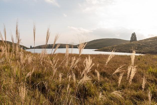 Plantes poussant au bord du lac sur le pré