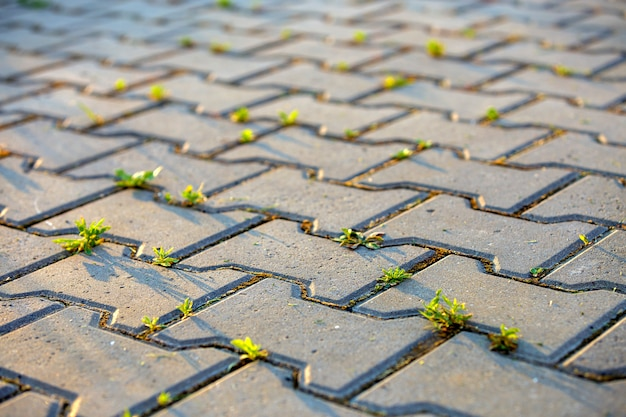 Plantes poussant entre des briques de chaussée en béton