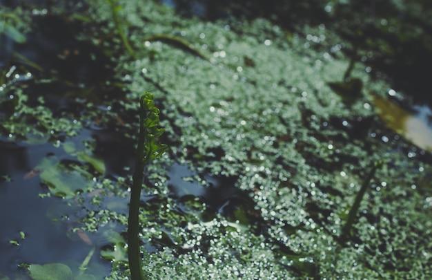 Plantes qui poussent sur l'eau