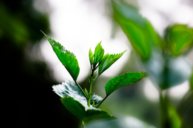 Plantes reflétant la lumière naturelle du soleil pendant la journée sur un fond sombre