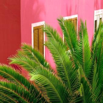 Plantes sur rose. art conceptuel de voyage. les îles canaries