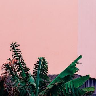 Plantes sur rose. concept de mode. paume