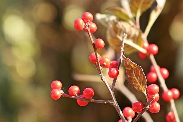 Plantes rouges en corée