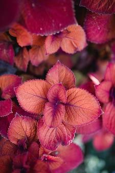 Plantes rouges