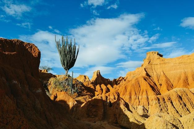 Plantes sauvages exotiques poussant sur les roches rouges dans le désert de tatacoa, colombie